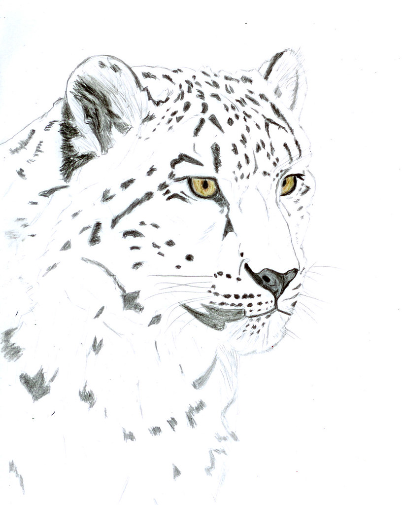 Snow leopard how to draw 3d